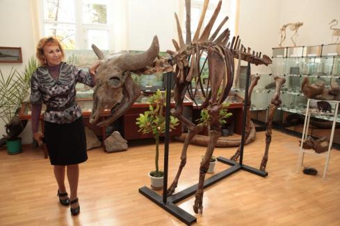 Палеонтологический музей ТПУ