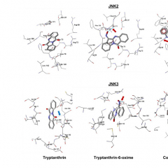 Триптантрин из «пушечного дерева» может помочь минимизировать последствия инсульта и инфаркта